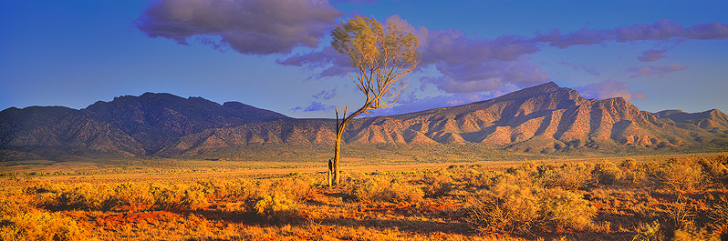 Life after lightning, Flinders Ranges, South Australia